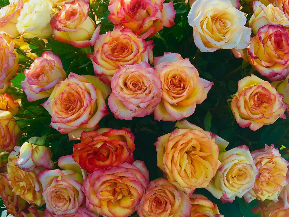 Букет желтых роз · бесплатная заставка