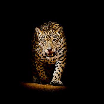 Обои на телефон леопард, леопард портрет