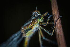 Бесплатные фото стрекоза,насекомое,макрос,портрет,макросъемка,беспозвоночный,крупным планом