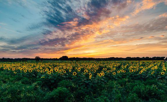 Бесплатные фото закат,поле,подсолнухи,природа,пейзаж