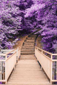 Бесплатные фото портрет,цветок,лепесток,розовый,лес,листья,парк,мост,яркий,цвет,дерево,лестница