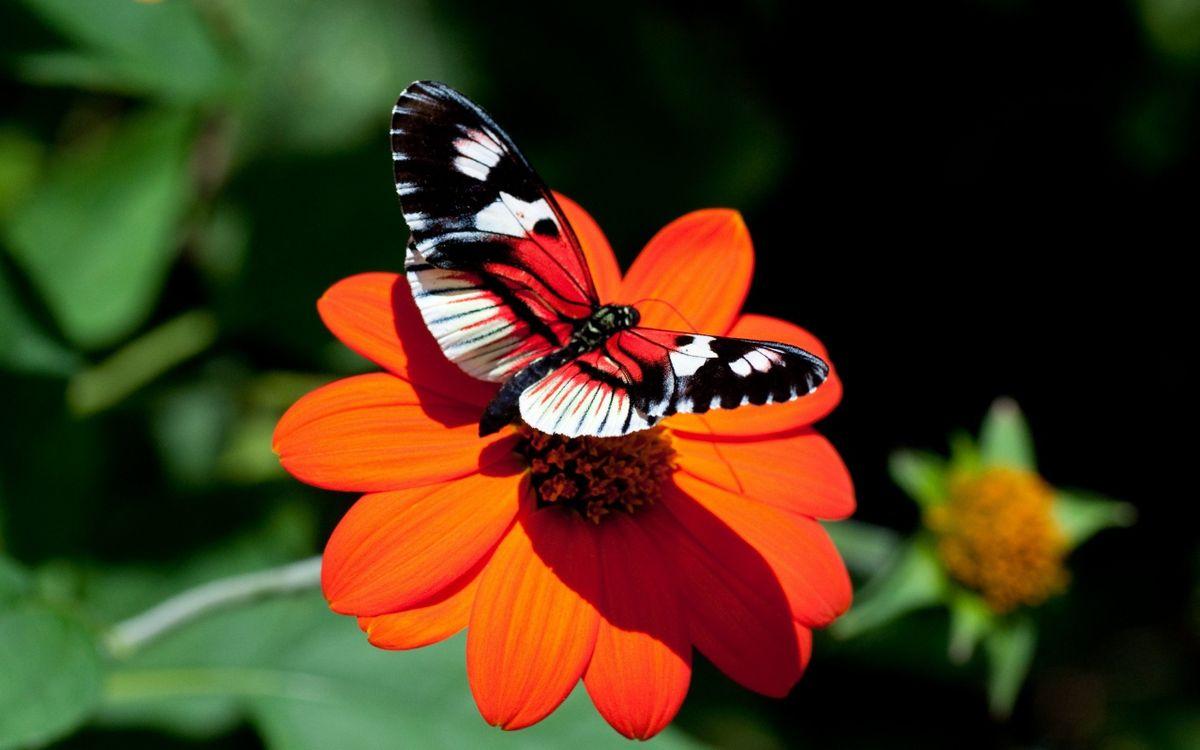 Обои бабочка, красная, природа картинки на телефон