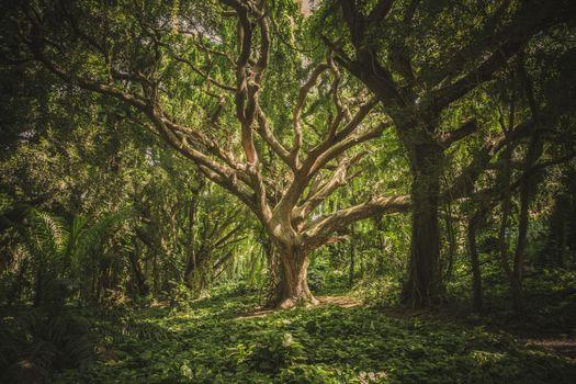 Заставки лес, Гавайи, природа