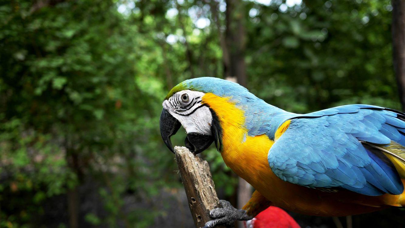 Фото бесплатно Ара, клюв, птица - на рабочий стол