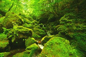 Photo free moss, trees, waterfall