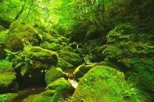 Бесплатные фото зелёный,лес,камни,речка,деревья,водопад,мох