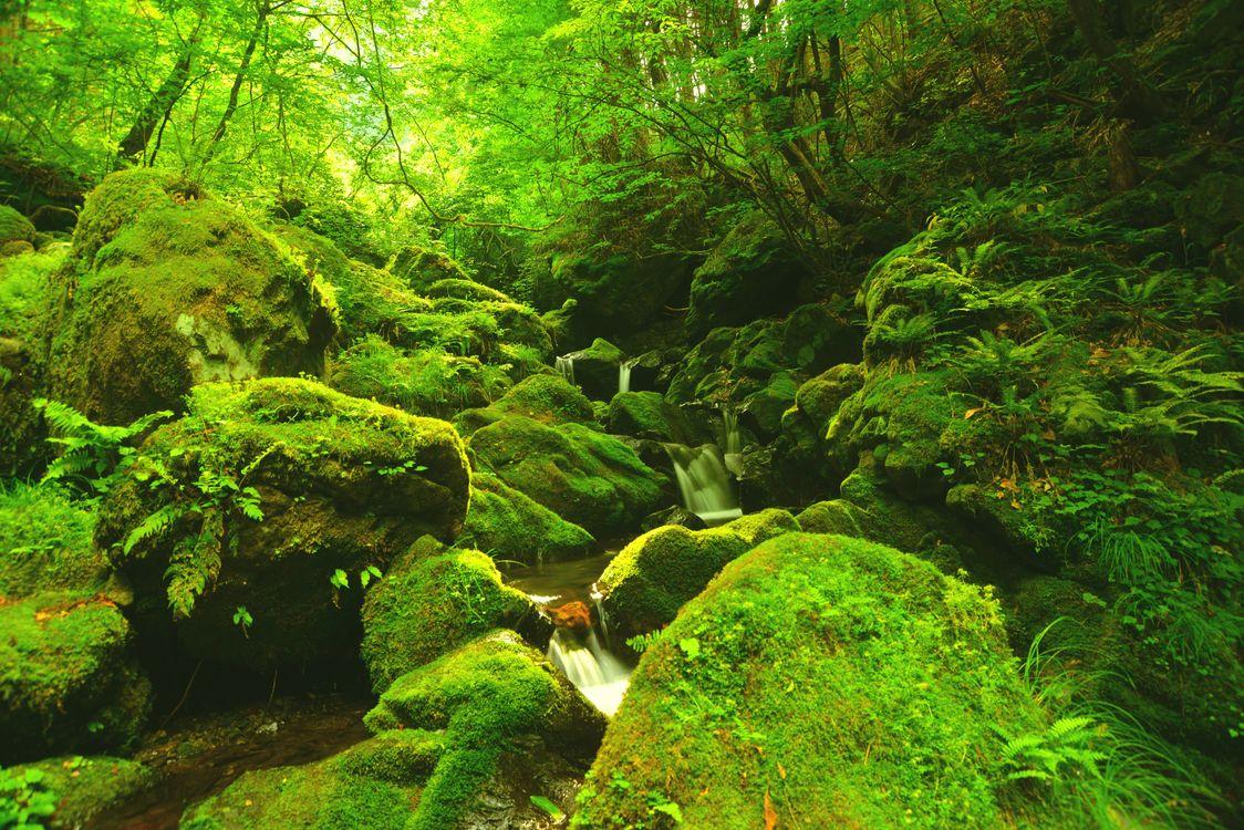 Фото бесплатно мох, деревья, водопад - на рабочий стол