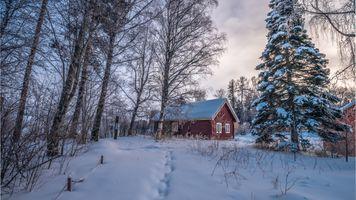 Фото бесплатно дом, деревья, следы