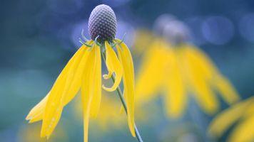 Заставки цветы, желтые цветы, природа