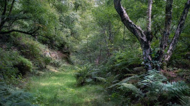 Фото бесплатно природа, пейзаж, папоротники
