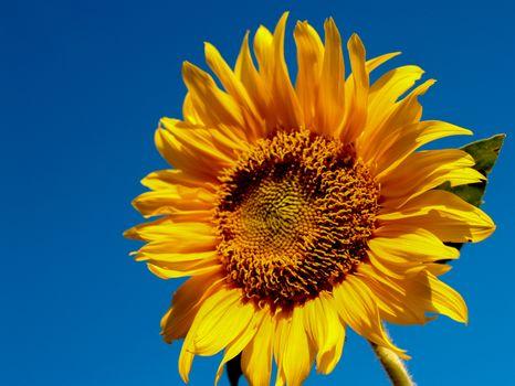 Бесплатные фото поле,цветок,рыжий,подсолнух,природа,сельское хозяйство,пейзаж,солнечно,задний план,сельских,растение,рост