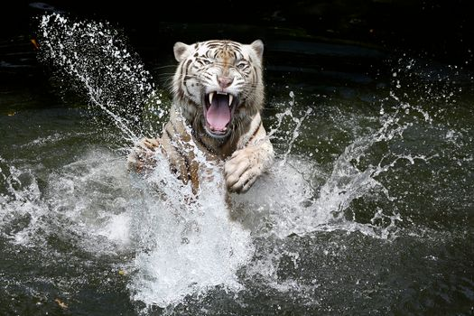 Злой белый тигр