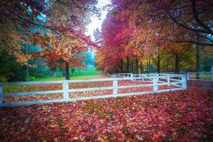 Бесплатные фото осень,парк,поляна,деревья,листва,осенние листья,забор