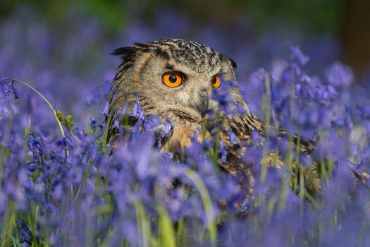 Заставки сова, цветы, трава