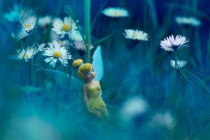 Заставки поле, кукла, ромашка