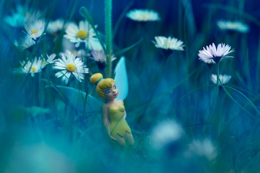 Photo free field, doll, chamomile