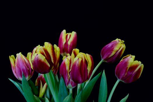 Фото бесплатно красивые, тюльпаны, цветы
