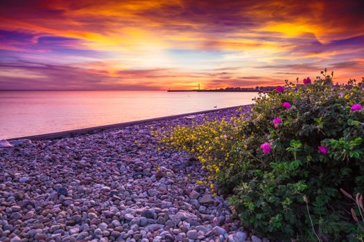 Photo free flowers, beach, landscape