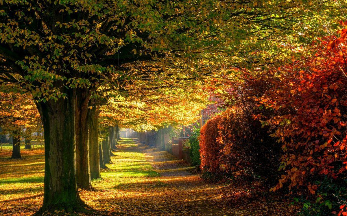 Фото бесплатно осень, красочный, лес, листья, природа, парк, дорога - на рабочий стол