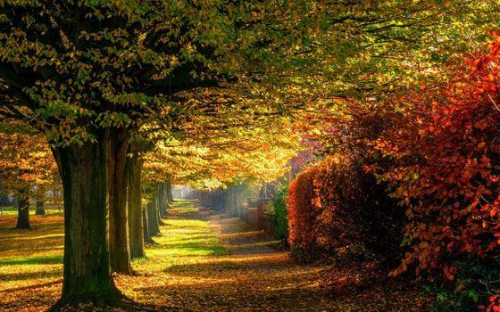 Фото бесплатно осень, красочный, лес, листья, природа, парк, дорога, деревья