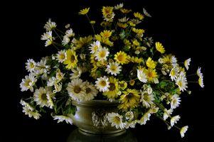 Заставки цветы, букет, маргаритки