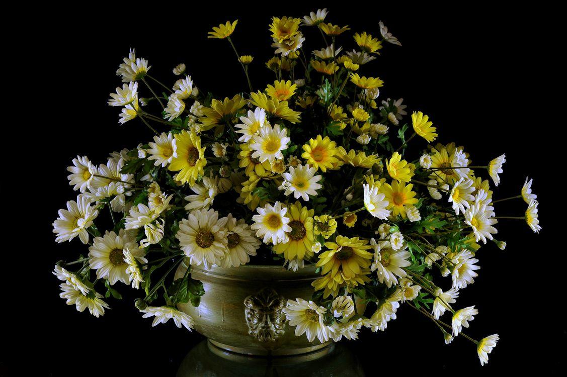 Фото бесплатно цветы, букет, маргаритки, лепестки, природа, лето, весна, хризантемы, ваза, чёрный фон, флора, цветы