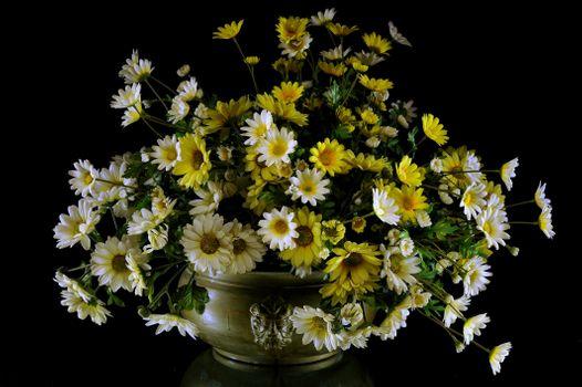 Заставки цветы,букет,маргаритки,лепестки,природа,лето,весна,хризантемы,ваза,чёрный фон,флора