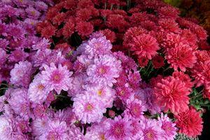 Фото бесплатно хризантемы, букет, цветы, цветочный фон, цветочная композиция, флора