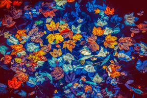 Заставки осень, водоём, осенние листья
