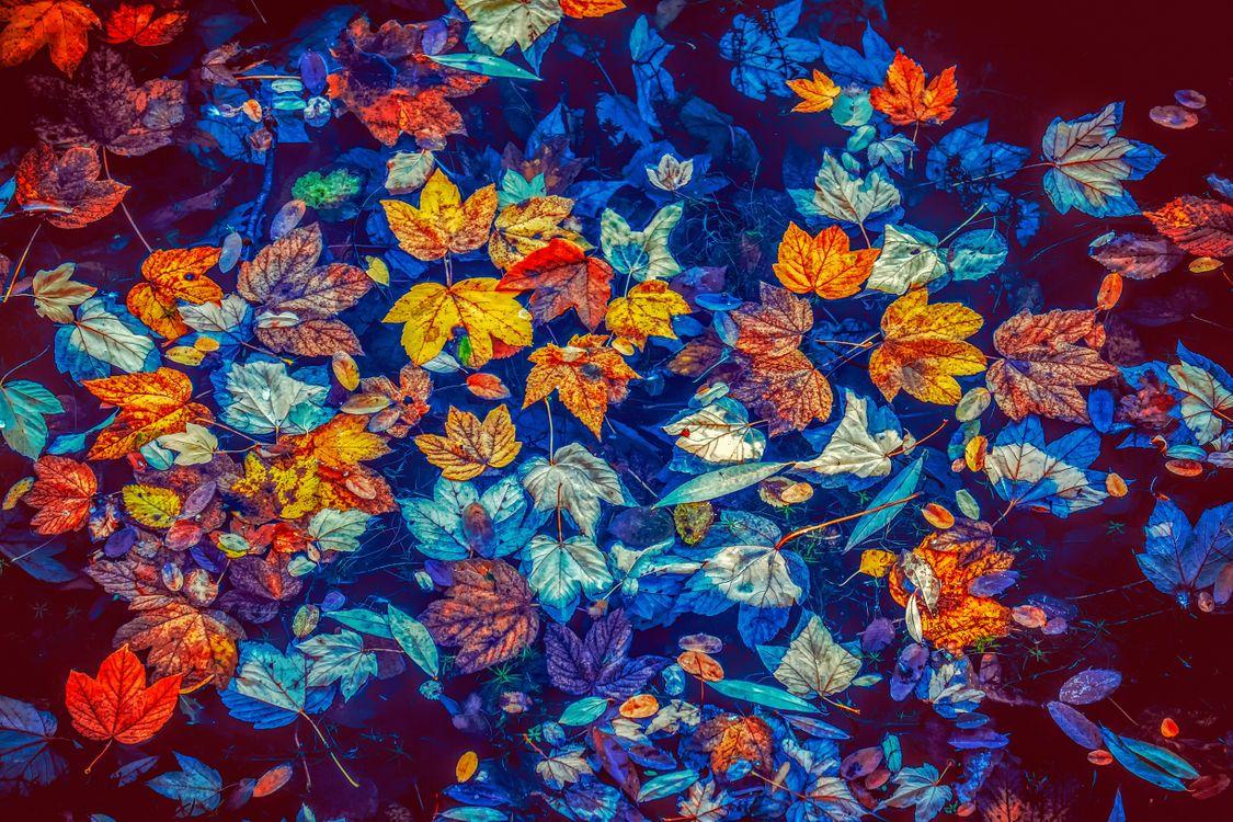 Фото бесплатно осень, водоём, осенние листья, краски осени, осенние краски, природа, природа - скачать на рабочий стол