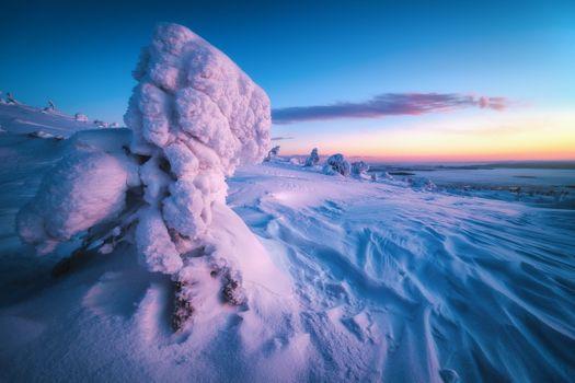 Blue snow Arctic · free photo