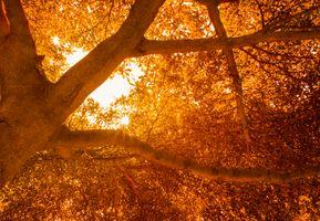Бесплатные фото дерево,природа,зеленый,деревьями,большой,лес,пейзаж