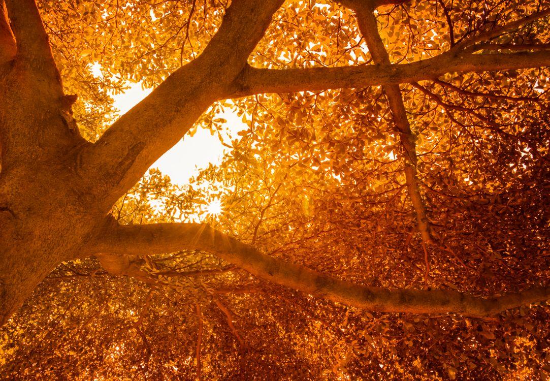 Фото дерево природа зеленый - бесплатные картинки на Fonwall