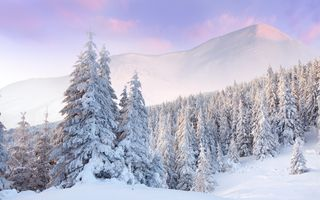 Фото бесплатно снег на деревьях, деревья, снег