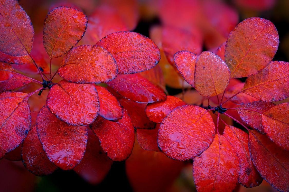 Фото бесплатно осенние листья, кустарник, ветки - на рабочий стол