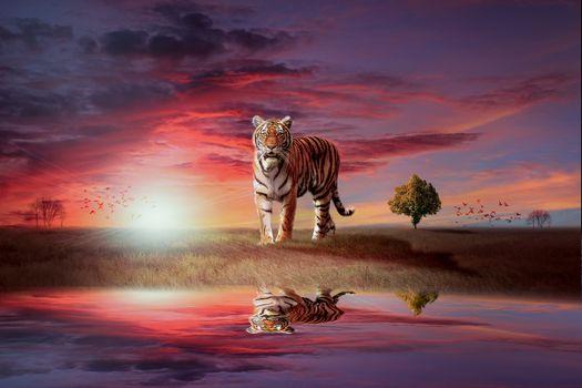 Бесплатные фото тигр,хищник,закат солнца,водоём,отражение,art