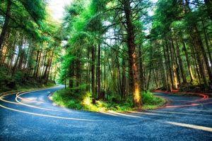 Фото бесплатно Curvy Forest Road, Oregon, дорога