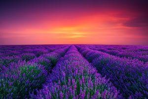 Фото бесплатно лавандовое поле, закат, лаванда