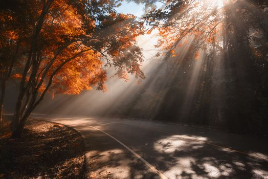 The rays of the autumn sun · free photo
