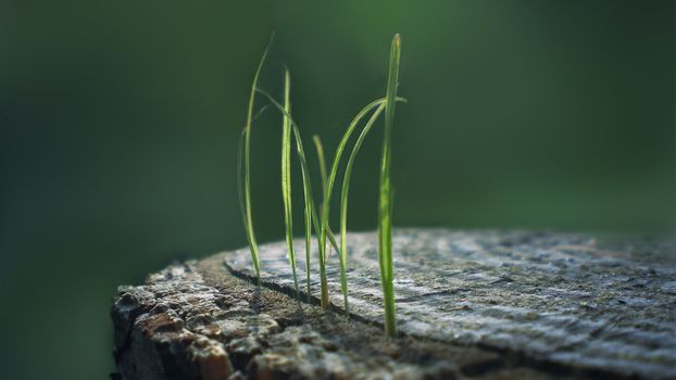 Grass growing out of the stump