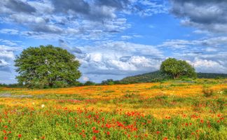 Photo free Wildflowers, Texas, field