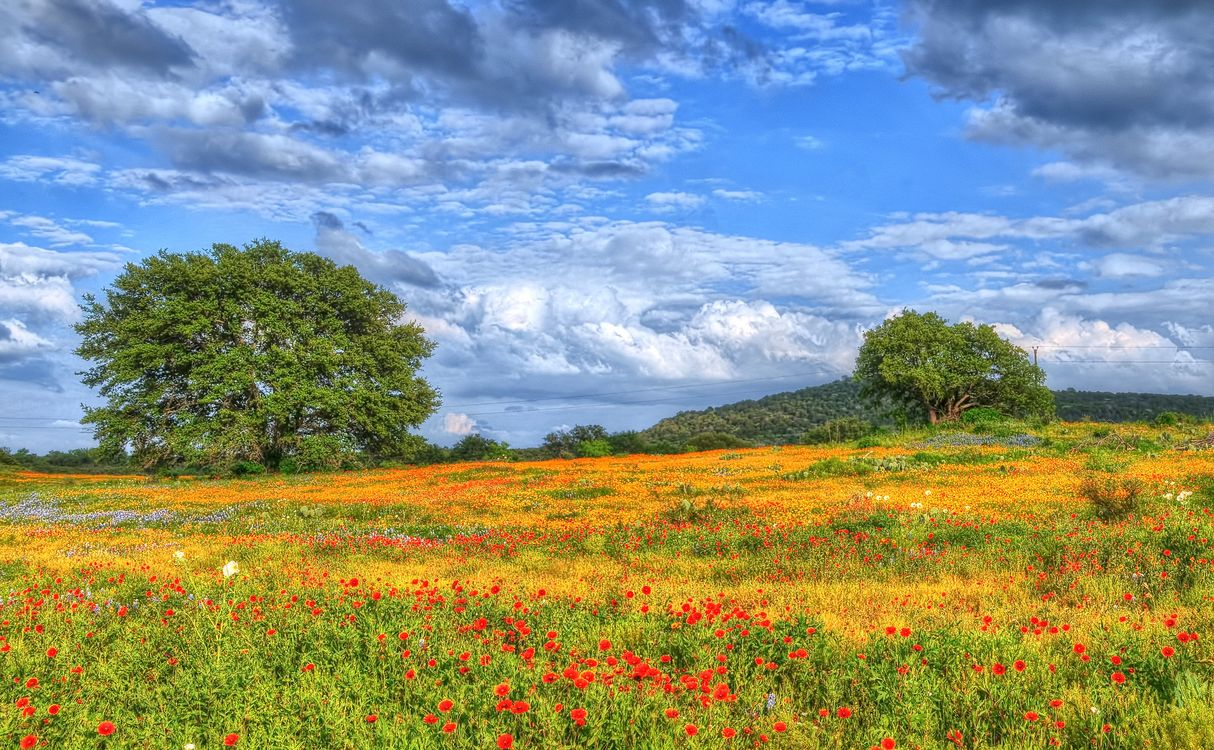 Photos for free Wildflowers, Texas, field - to the desktop