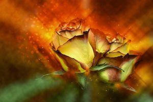 Фото бесплатно розы, роза, цветочная композиция