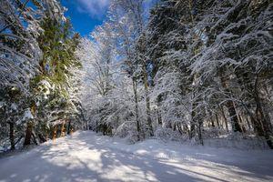 Дорога окруженная деревьями