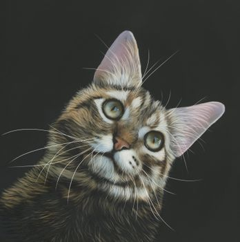 Photo free cat, painting, animals