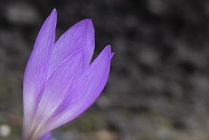 Фото бесплатно природа, цвести, растение