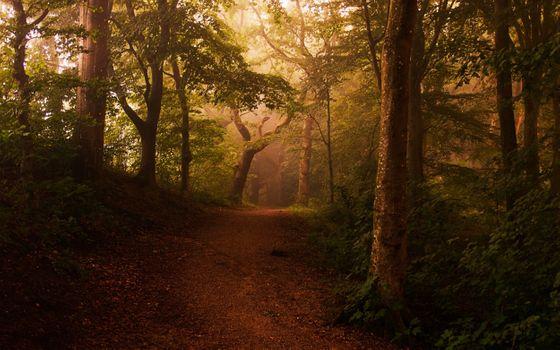 Бесплатные фото проселочная дорога,туман,лес,кусты,свет,деревья,листья,путь