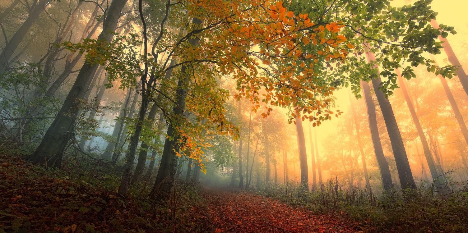 Обои осенние краски, дорога, осенние листья картинки на телефон