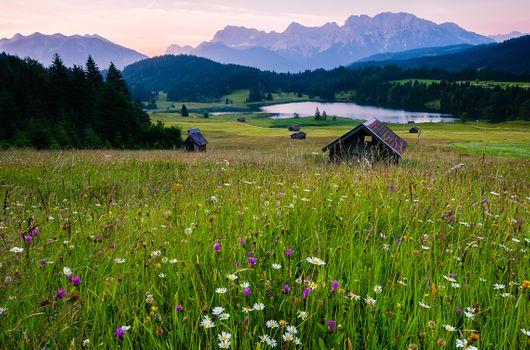 Фото бесплатно цветы, озеро Geroldsee, Geroldsee