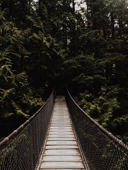 The bridge in the jungle · free photo